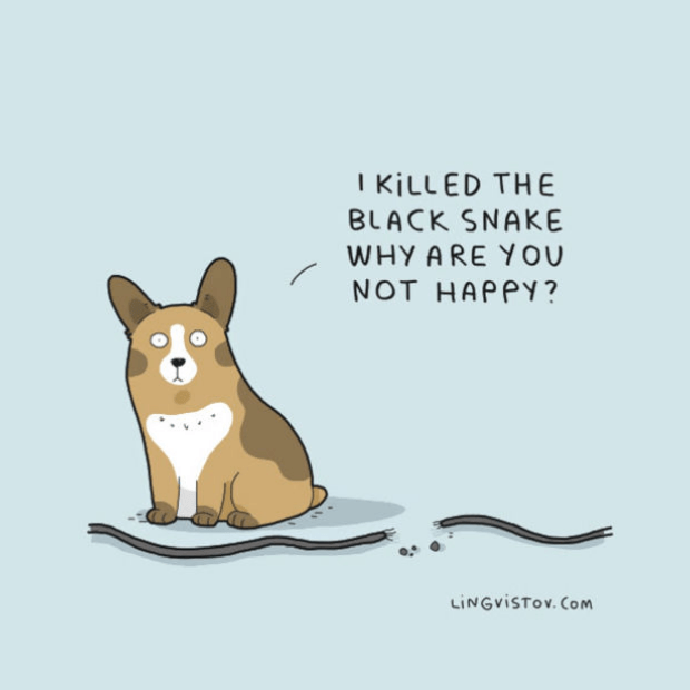 Brilliant-Animal-Comics-12