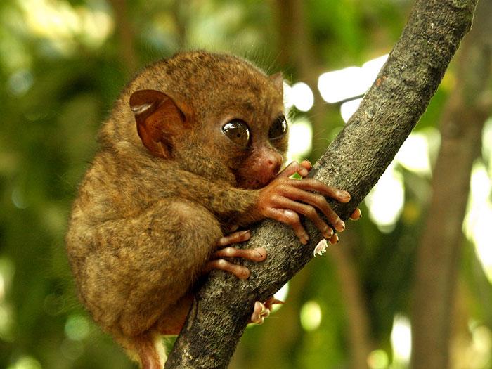 Rare Animal Babies You've Never Seen Before - 13. Baby Tarsier