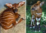 37 Rare Animal Babies You've Never Seen Before