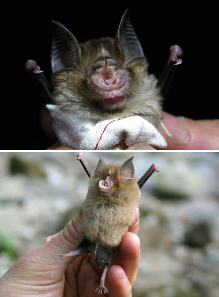 Rare Animal Babies You've Never Seen Before - 34. Baby African Bat