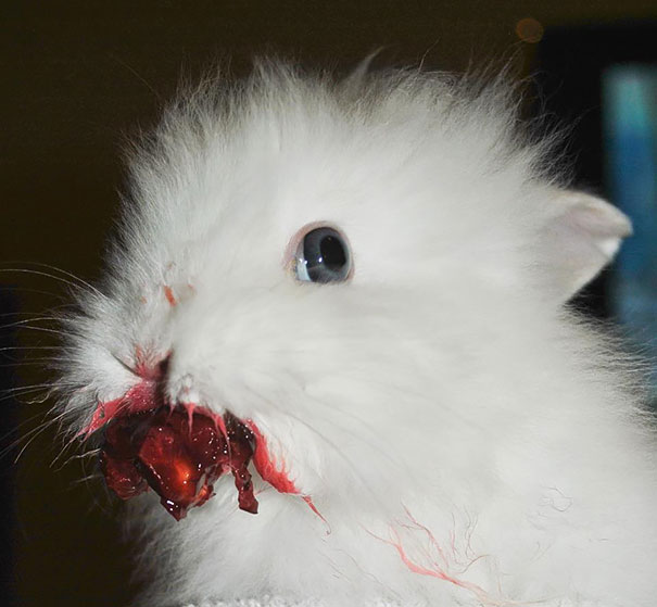 Animals eating cherry