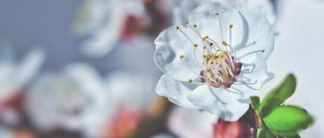 Les différentes fleurs de bach