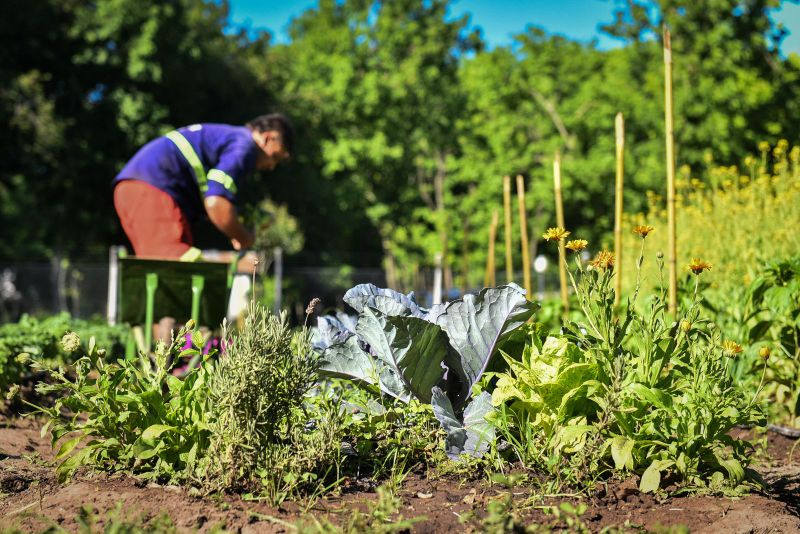 Escobar Sostenible: la huerta agroecológica Municipal finalizó su quinta cosecha