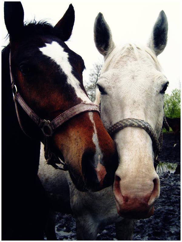 horses_by_okashi_pl_d1hnh00-fullview