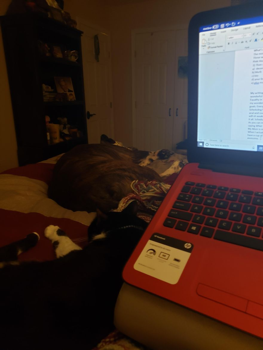 Amy Romine's Desk on Alternative-Read.com
