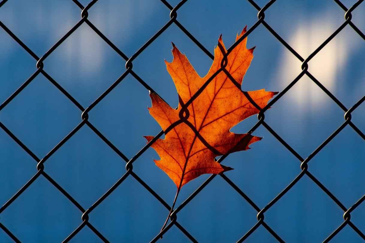 orange leaf on chainlink fence