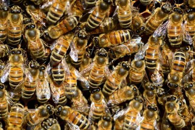 honey-bee-water-buckfast-59829