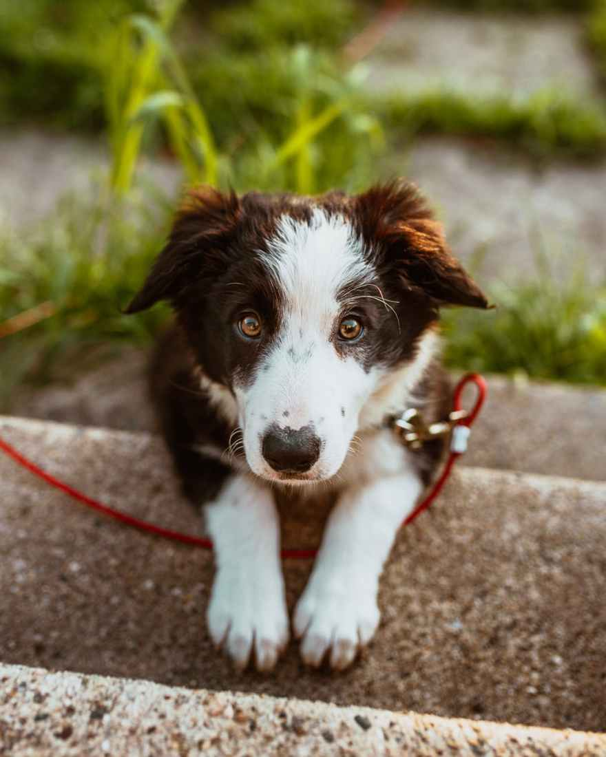 photo of white and brown coated dog puppy