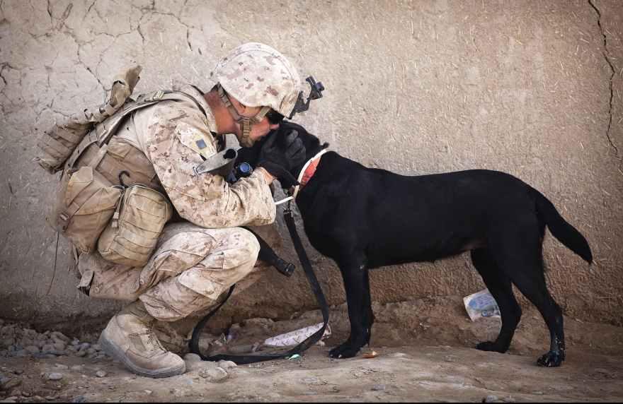 soldier-dog-companion-service