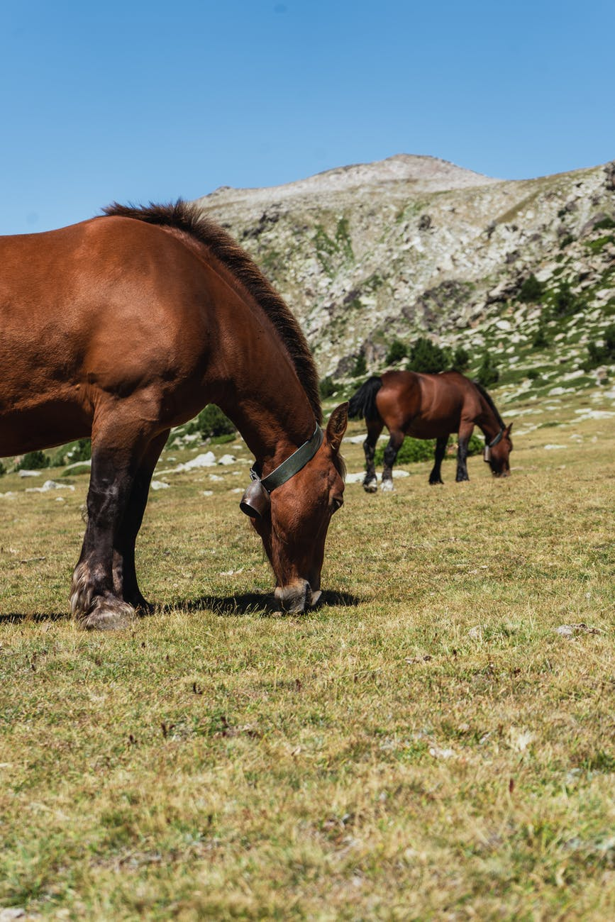 adorable horses pasturing in mountainous valley on sunny day