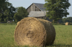 Best Hay for Horses
