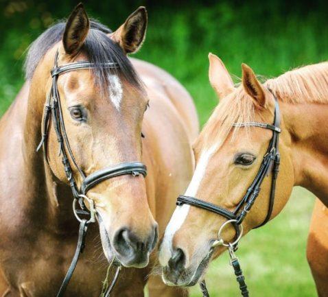 Is Garlic Safe for Horses? Top Myths Debunked 1
