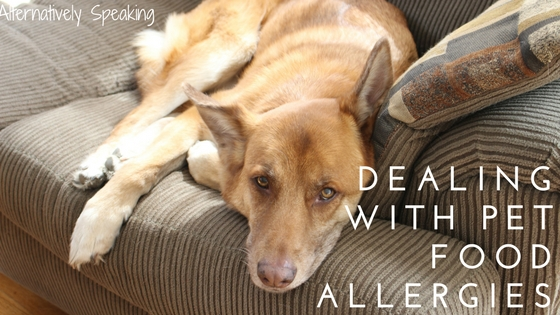 Dealing with Pet Food Allergies