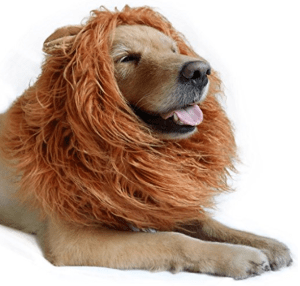 costume, pet costume, pet costume ideas, Halloween, dog, dog costume