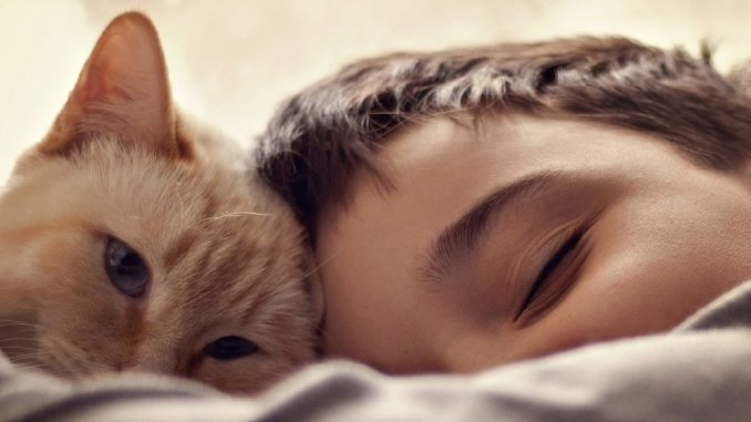 how can cats help kids with autism