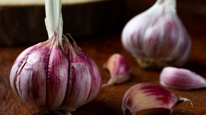 The many benefits of Aged Garlic Extract