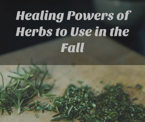 Healing Herbs for the Autumn Season