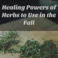 healing powers of herbs