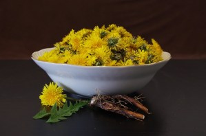 Dandelion for Natural Healing
