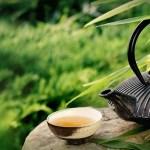Cancer : Le thé vert boosteur d'efficacité ?