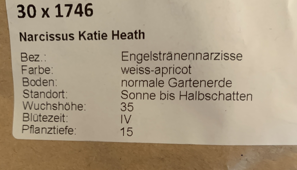 Narcissus Katie Heath