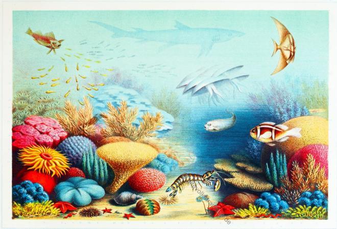 Sinai, Rotes Meer, Korallenriff, Tauchgebiet, Korallenbank , Korallen, Unterwasser, Landschaft,