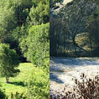 Seasons of Love - Limerick