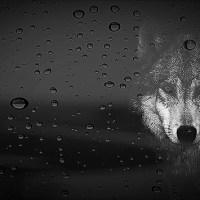 Haiku - Hunter's Moon