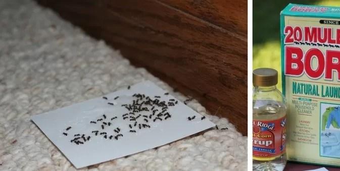 القضاء على النمل الاسود