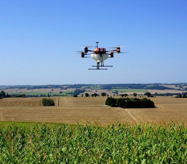 Agriculture biologique: Le traitement de la pyrale du maïs grâce au largage de trichogrammes par drone