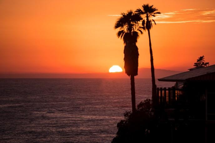 dsc06738_palmtree-sunset