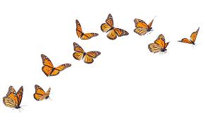 qi gong butterflies