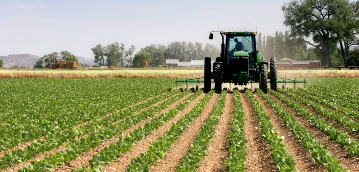 Agriculture tractor plowing field