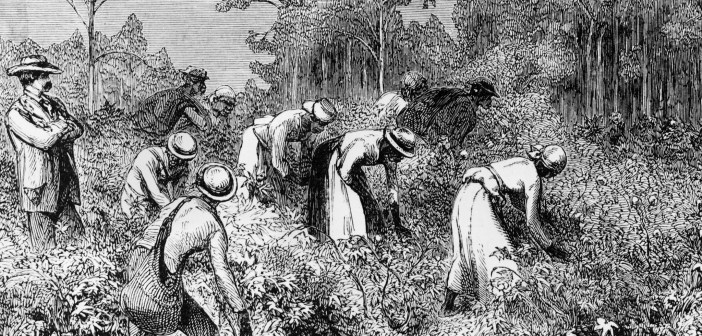 slavery in fields