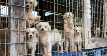puppy mill