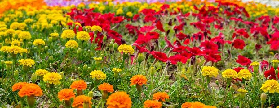 Alton Horticultural Society