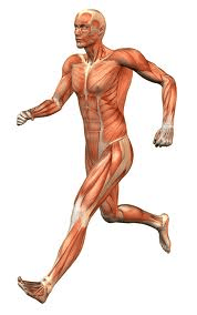 PERFORMANCE PILATES FOR RUNNERS