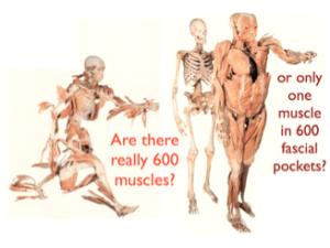 myofascial pain 600 muscles