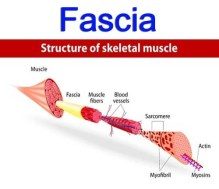 myofascial pain what is fascia