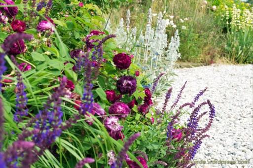 rosa gallica Ombrée Parfaite, salvia nemorosa, stachys lanata and some blades of pennisetum alopecuroides
