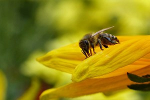 local-honey-bee-removal-albuquerque-d2-505-500-4780