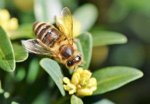 local-honey-bee-removal-albuquerque-e1-505-500-4780