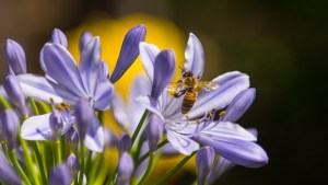 local-honey-bee-removal-albuquerque-g-505-500-4780