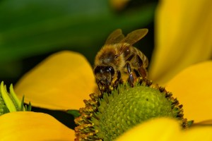 local-honey-bee-removal-albuquerque-x-505-500-4780