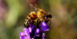local-honey-bee-removal-albuquerque-z-505-500-4780