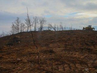 Ege Bölgesi'nde yazın yanan ormanlık alanlar yeşillenecek