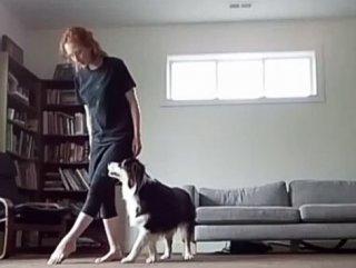 Süper yetenekli fenomen köpek