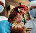 """""""الزراعة"""" : حظر مؤقت لاستيراد الطيور من صربيا"""