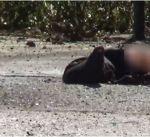 قتلى وجرحى بإطلاق نار وبتفجيرين بالبرلمان الإيراني ومرقد الخميني