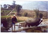 Man Plowing outside Tantou, China